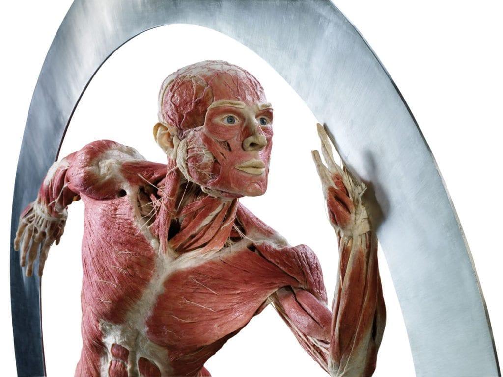 Gunther  von Hagens' BODY WORLDS. Il vero mondo del corpo umano