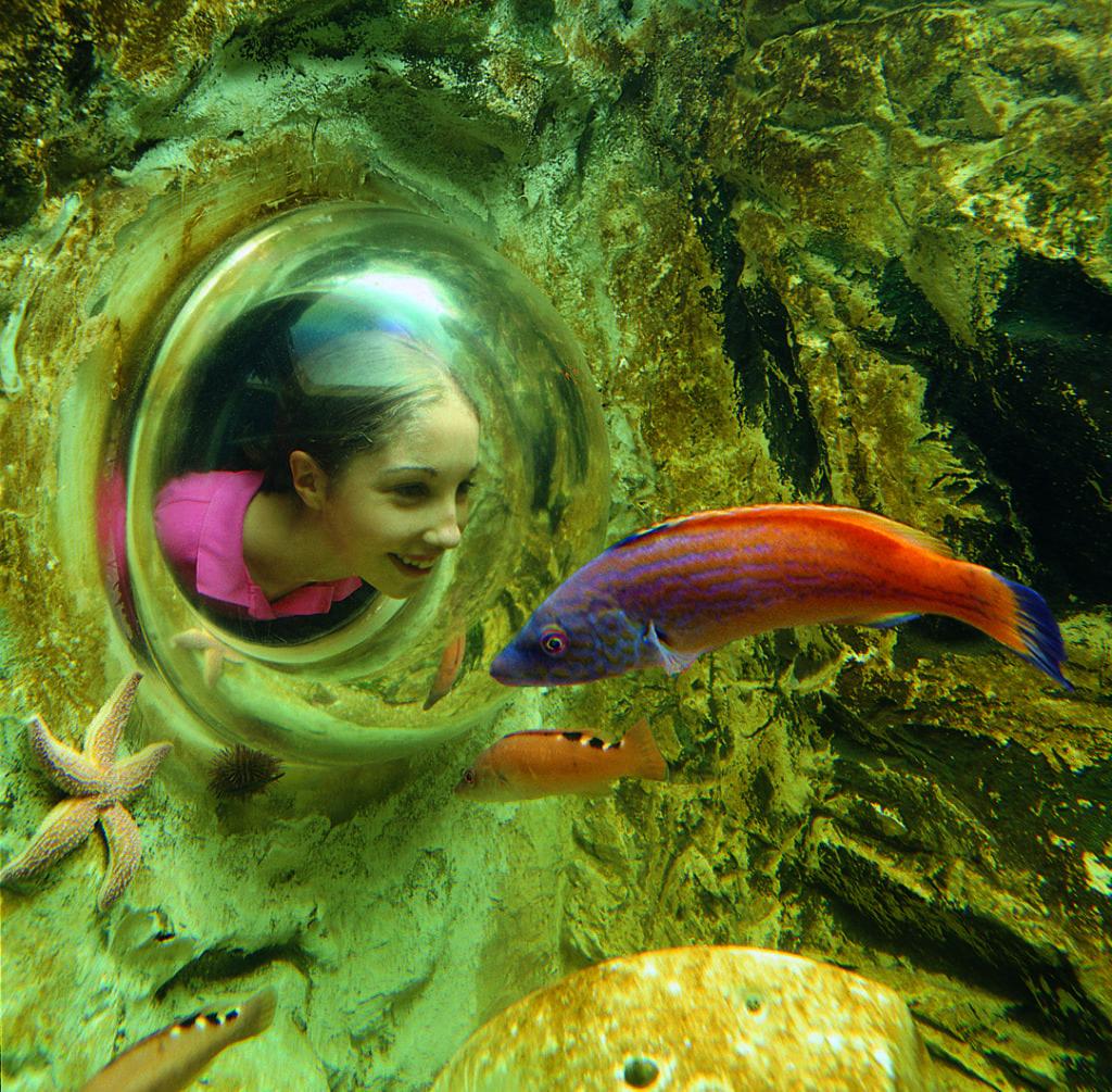 SEA LIFE: aprirà a giugno l'Acquario di Roma