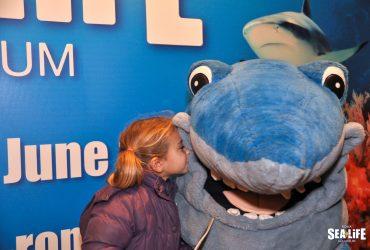 BIG BLUE 2012 2