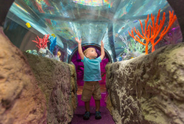 SEA LIFE Aquarium Roma comunica con la Spencer & Lewis