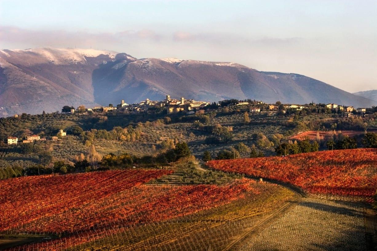 Sostenibilità in agricoltura: Montefalco obiettivo a 75% di fitofarmaci in meno con un risparmio 60milioni di euro per l'Umbria